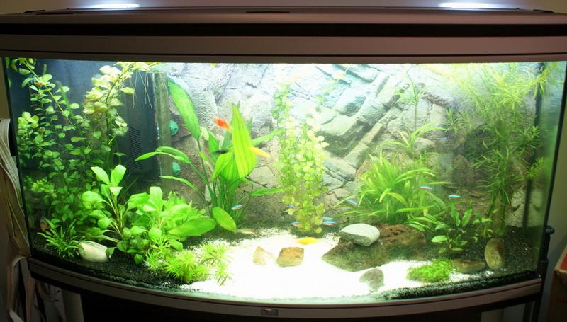 decoration aquarium eau douce photos
